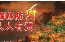 《广东省森林防灭火工作职责事项划分意见》正式印发